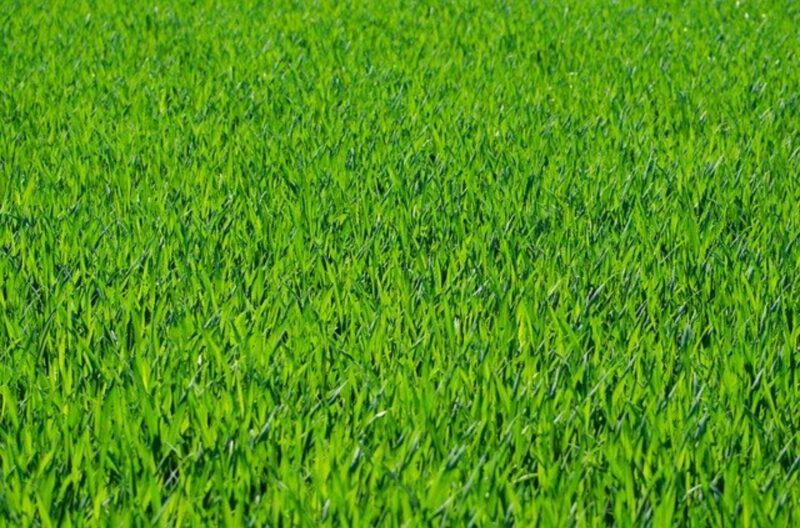 Jak dbać o trawnik wiosną?